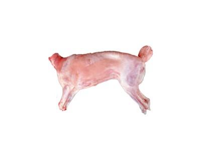 公羊 靖远羊羔肉土滩羊半只整只羊羔 甘肃放养新鲜生羊肉白条羊烤全羊 10kg整只土滩羊