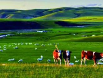 农遗良品|阿鲁科尔沁羊肉:纯正草原味